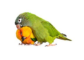 //www.omarsexoticbirds.com/wp-content/uploads/2018/05/bird-care-img-5.jpg