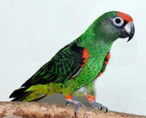 Jardines Parrot