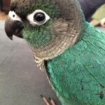 Turquoise Green Cheek