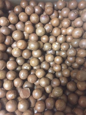 MACADAMIA NUTS RAW IN SHELL